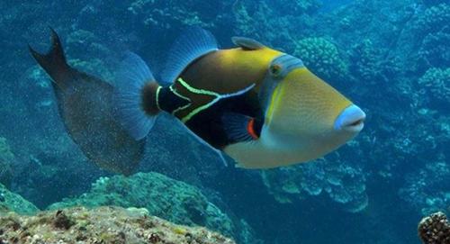 壁纸 动物 海底 海底世界 海洋馆 水族馆 鱼 鱼类 500_271